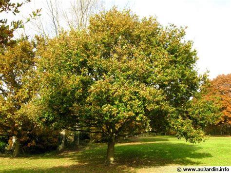 chêne pédonculé quercus robur conseils de culture