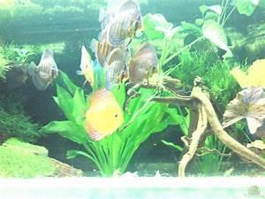 Pflanzen Im Aquarium : pflanzen im aquarium becken 13066 aus becken 13066 von sinan ~ Michelbontemps.com Haus und Dekorationen