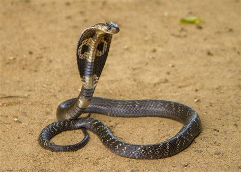 Dozens of Venomous Snakes Seized at Airport Before Being ...