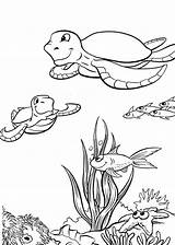 Turtle Coloring Sea Pages Print sketch template