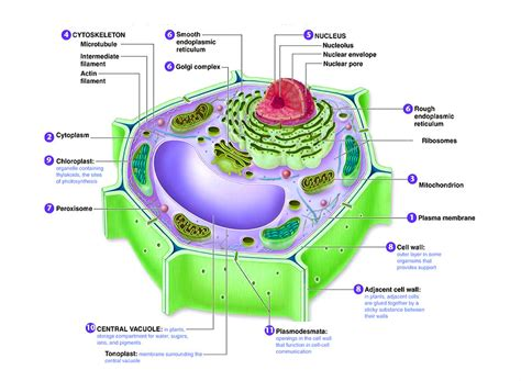 Science  Chart Diagram  Charts, Diagrams, Graphs Best Images, Tables, Models, Maps And Logos