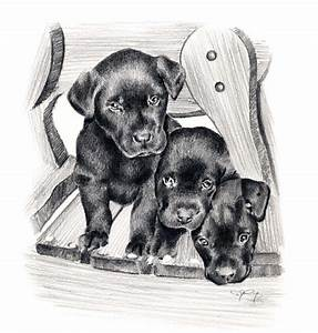 Black Lab Puppies Dog Pencil Drawing Art Print Signed by