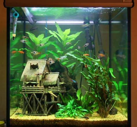 aquarium bien le choisir communiqu 233 presse aquarium bien le choisir