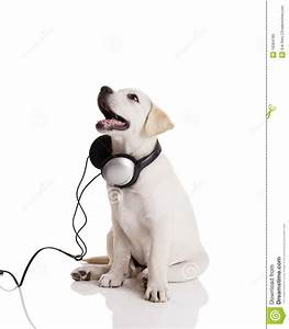 Dog listening to music stock image. Image of puppy ...