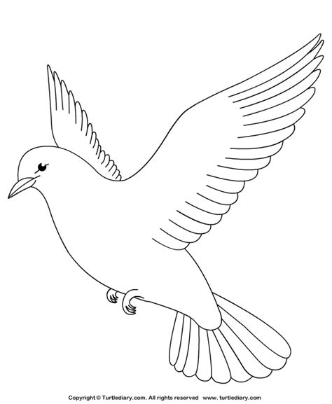 Dove Coloring Page Dove Coloring Sheet Turtle Diary