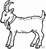 Coloring Goat Pages Billy Goats Printable Drawing Three Colouring Gruff Printables sketch template