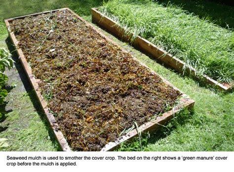 best mulch for vegetable garden beds 141 best images about garden raised beds on pinterest gardens raised beds and garden beds