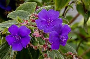 Florida Plants with Purple Flowers