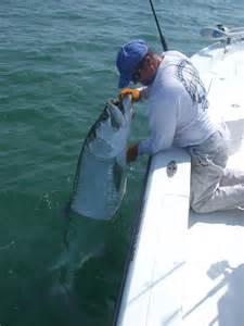 Tarpon Fishing Florida