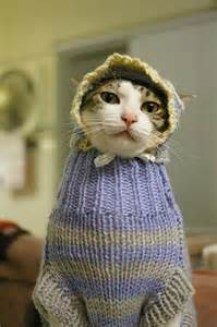 cats in sweaters things