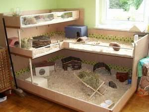 Meerschweinchen Gehege Ikea : schweinegehege zuk nftige projekte pinterest meerschweinchen kaninchen und ~ Orissabook.com Haus und Dekorationen