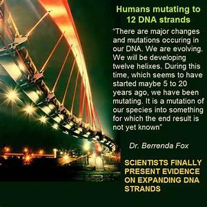 Human mutating to 12 DNA strands | 12 Strand DNA ...