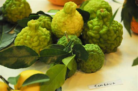 ferrandi cuisine image gallery liste agrumes
