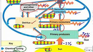 Mr  Walker U0026 39 S Biology 20 Biogeochemical Cycles Overview