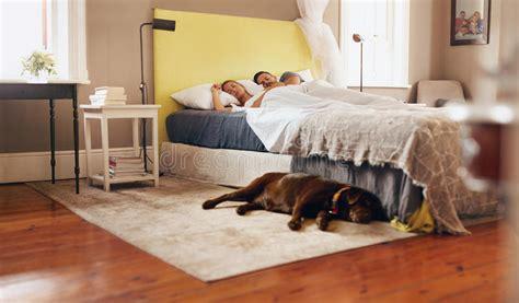 auf boden schlafen junge paare die bequem auf bett mit hund auf boden schlafen stockfoto bild 54346194