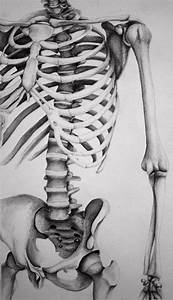 13 best Bones images on Pinterest | Skeletons, Skeleton ...