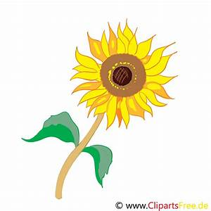 Bilder Blumen Kostenlos Downloaden : clip art sonnen blume kostenlos ~ Frokenaadalensverden.com Haus und Dekorationen