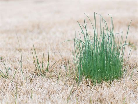 How To Identify Common Lawn Weeds