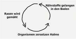 Rasenschnitt Liegen Lassen : im test der gardena handrasenm her 380 ~ Lizthompson.info Haus und Dekorationen