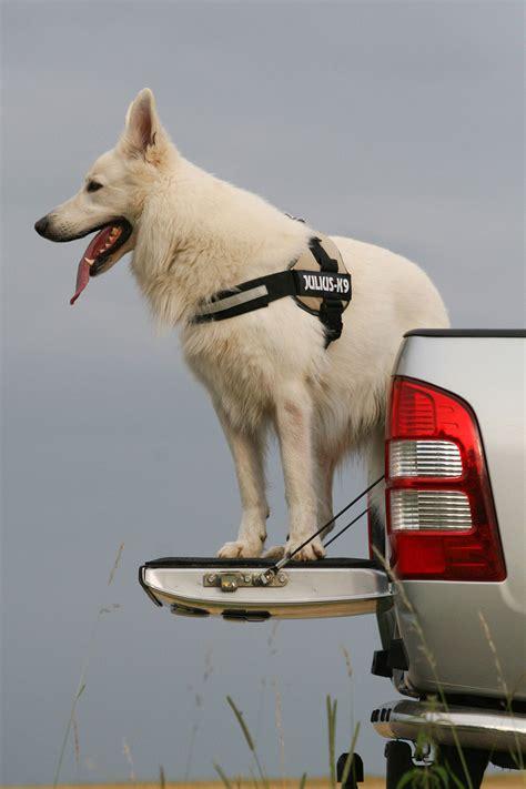 hundetransport im auto risiko hundetransport im auto