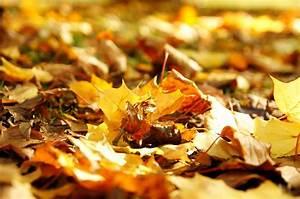 Kostenlose Bilder Herbst : kostenlose bild gelbe bl tter boden herbst ~ Yasmunasinghe.com Haus und Dekorationen