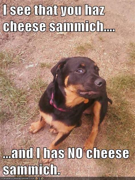 Sammich Meme - 30 funny animal captions part 4 30 pics amazing creatures