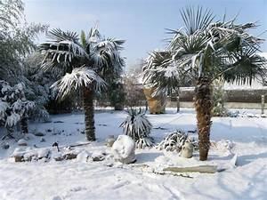 frostschutz fur palmen auf terrasse und balkon With französischer balkon mit winterharte palmen für den garten kaufen