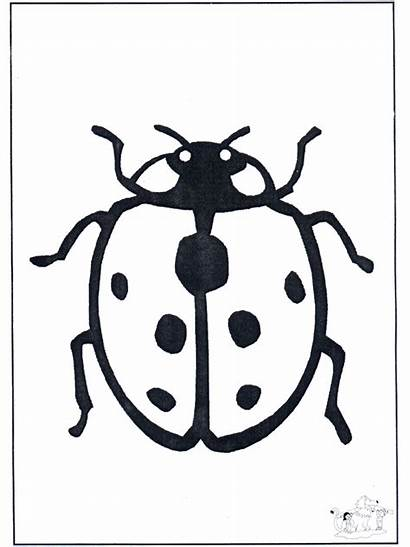 Coccinelle Coccinella Joaninha Ladybird Insectes Coloriage Beestje