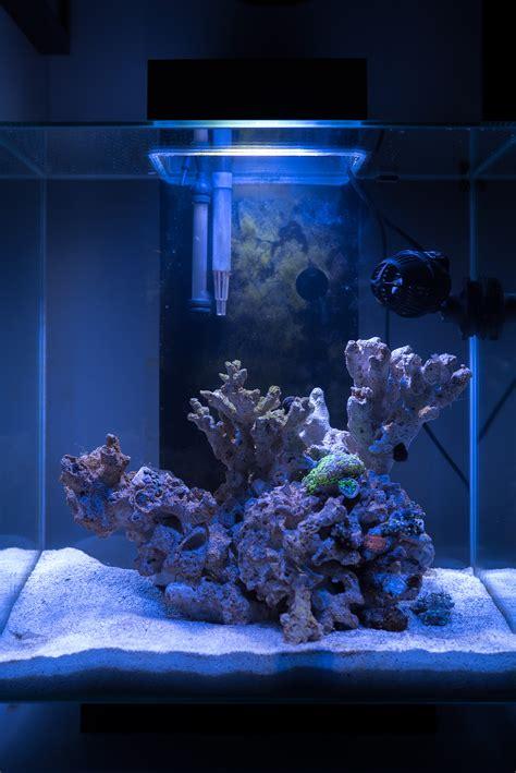Nano Reef  Fluval Edge 2  Fragalicious  Justin Fox