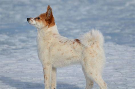 dog breeds beginning   pet paw