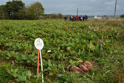 chambre agriculture cotes d armor la betterave concentré d 39 énergie journal paysan breton