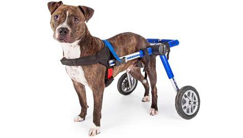 top   dog wheelchair  dogs rehabilitation