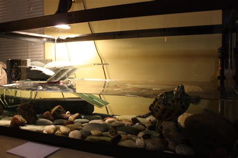 how to keep turtle tank clean the 654 turtle s tank