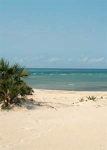 Forum Croisiere Ocean Indien : croisi res plong e aux les parses nakadive madagascar ~ Medecine-chirurgie-esthetiques.com Avis de Voitures