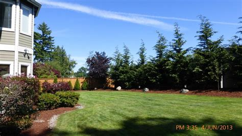 Privacy Trees For Small Yards