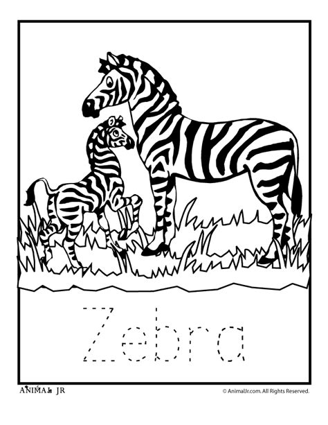 zebra coloring pages    print