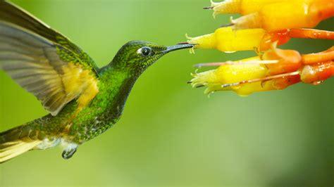 nature season 35 super hummingbirds press release