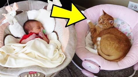 A Woman Took In This Cat As A Kitten But This Video Show