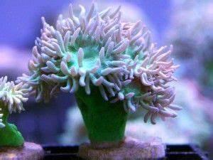 13 Best images about Saltwater Aquarium on Pinterest