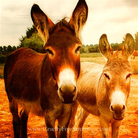 donkeys burros donkey than related middle east uploaded africa come where they horse