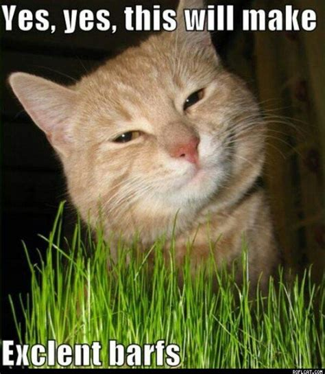 Purrrfect Meme - lolcats worship basement cat pinterest