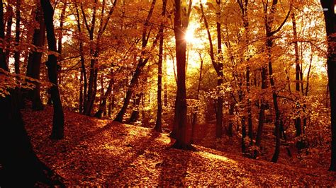 Aesthetic Autumn Wallpapers Desktop by Fall Aesthetic Desktop Wallpapers Top Free Fall