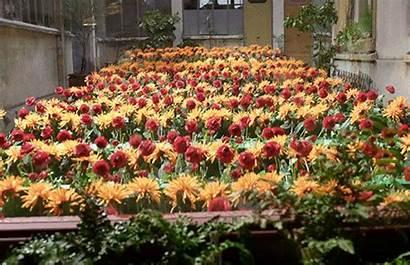 Flowers Mood Indigo Flower Gifs Garden Michel