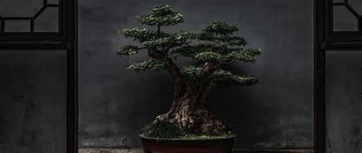 Bonsai Tree Plant Decorative Door Dual 1080p
