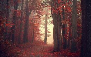 Landscape, Nature, Fall, Trees, Mist, Path, Red, Leaves, Forest, Red, Leaves, Wallpapers, Hd