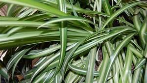 Plante Interieur Haute : quelles plantes d int rieur choisir pour une pi ce peu clair e ~ Teatrodelosmanantiales.com Idées de Décoration