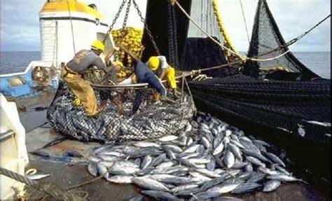 la consequence de la surexploitation des ressources halieutiques a kayar seneplus