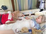 Pictures of Service Dogs In Hospitals