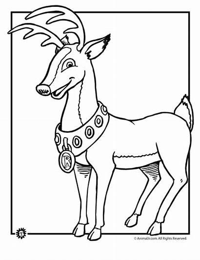 Rudolph Reindeer Coloring Nosed Drawing Kleurplaten Kleurplaat