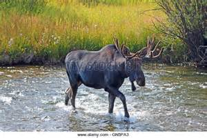 horn creek stock photos horn creek stock images alamy